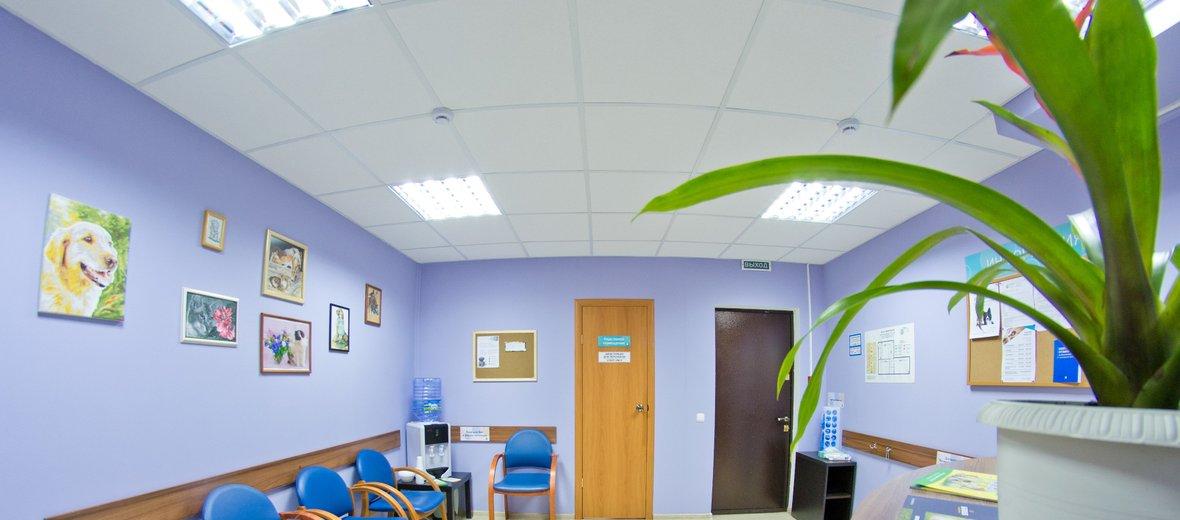 Фотогалерея - Ветеринарная клиника LizaVet
