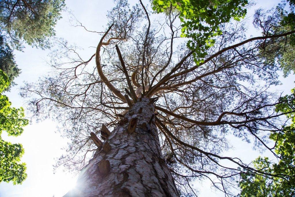 фотография Базы отдыха Сосновый бор