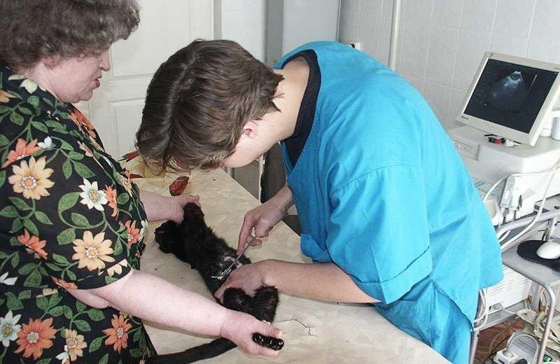 Фотогалерея - Первомайский ветеринарный центр на Сиреневом бульваре
