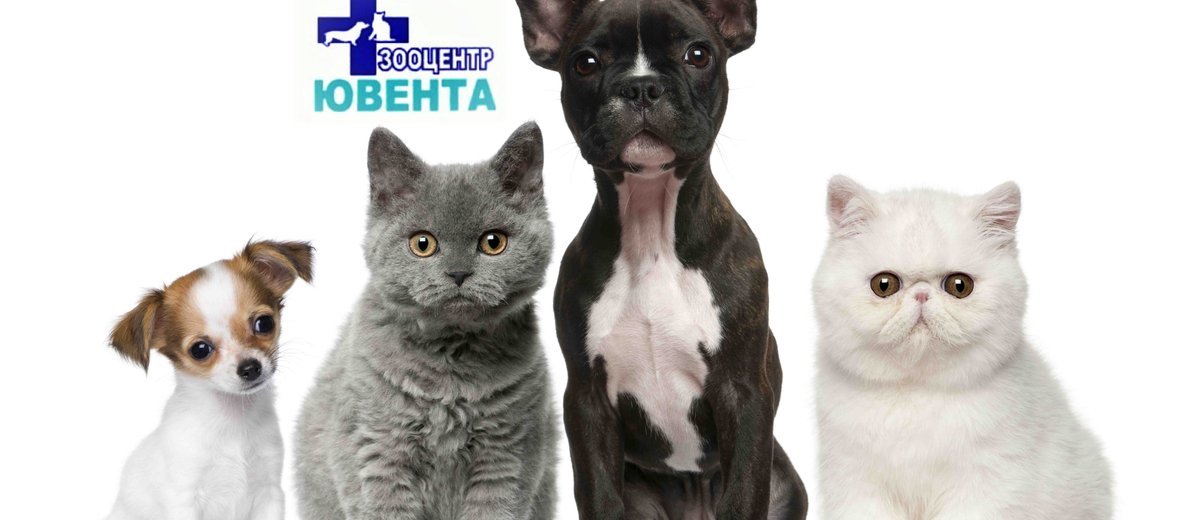 Фотогалерея - Ветеринарная клиника Ювента в Дзержинском районе