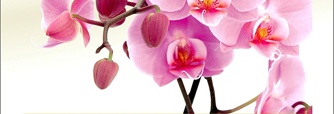 фотография Салона красоты L'amour des Orchidees