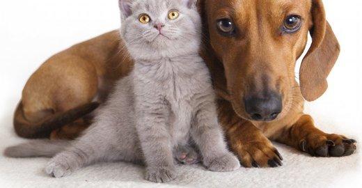 фотография Ветеринарной клиники Доктор в Азове