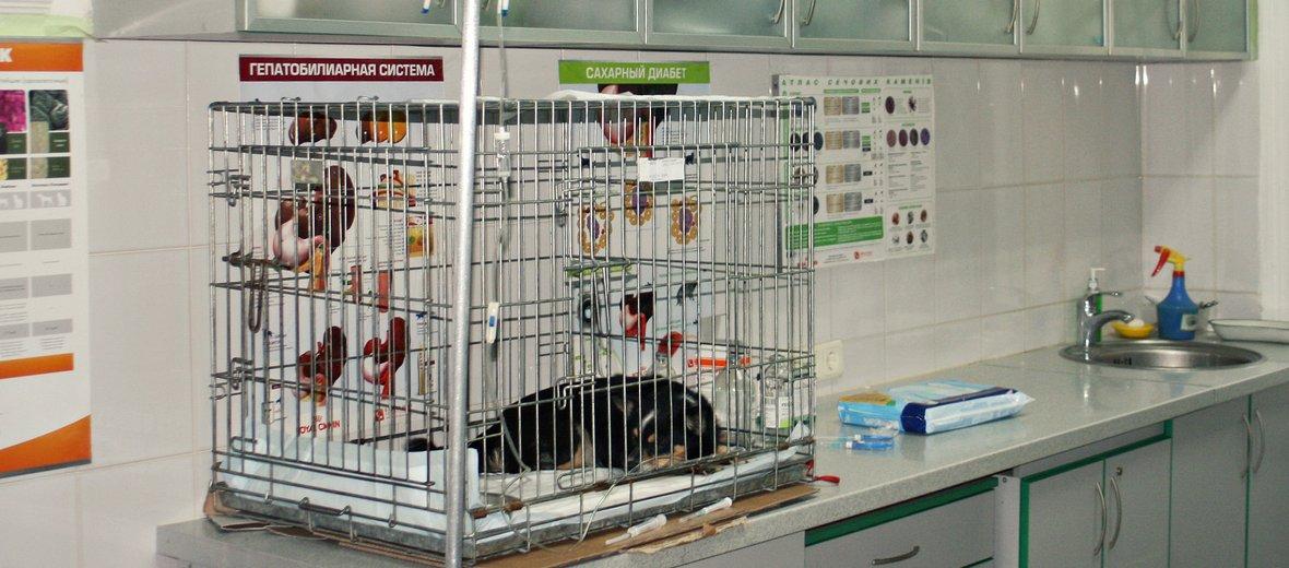 Фотогалерея - Алден-Вет, ветеринарные центры