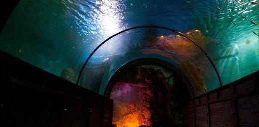 фотография Океанариума в ТЦ РИО