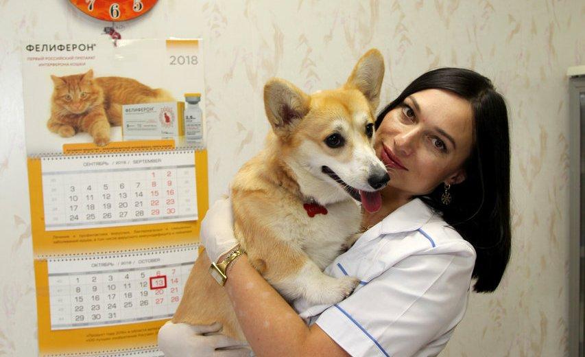 Фотогалерея - Ветеринарная клиника Vetpegas в Красногорске