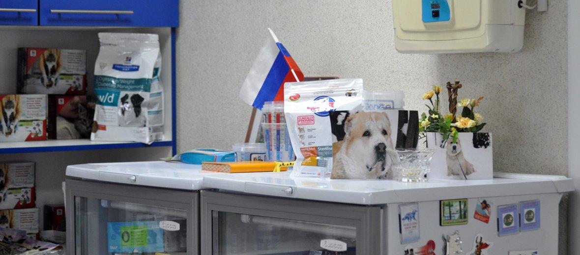 Фотогалерея - Ветеринарная клиника Пес и Кот на Вокзальной улице в Петушках