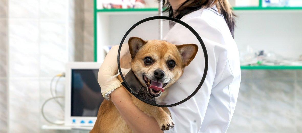 Фотогалерея - Ветеринарный центр ВетКэт в Строгино