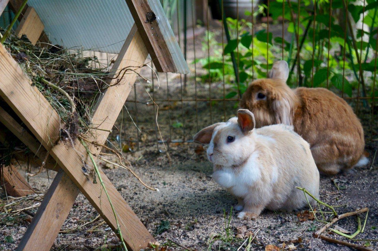 фотография Зоогостиницы Rabbits Hotel