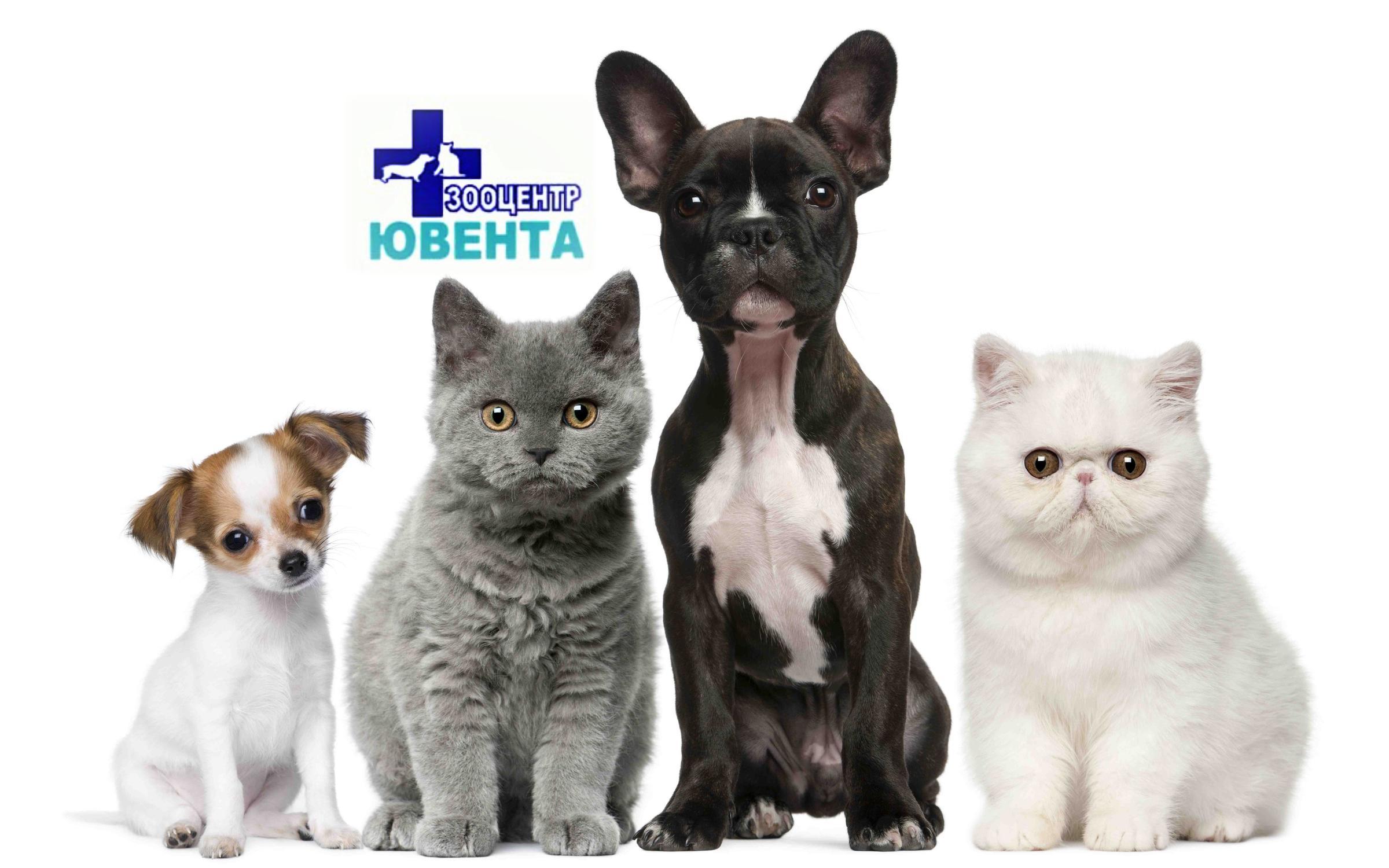 фотография Ветеринарной клиники Ювента в Дзержинском районе