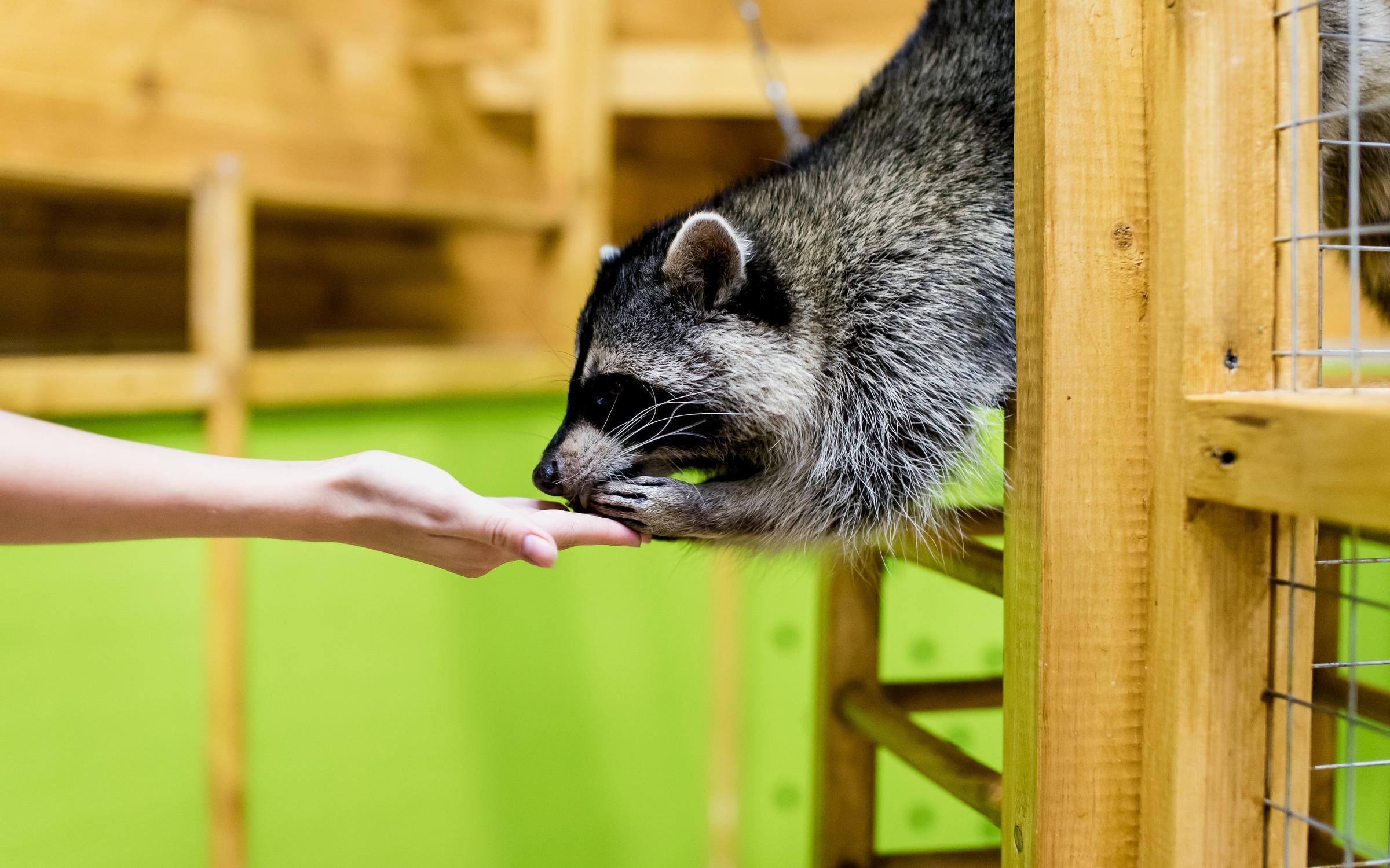фотография Ручной zоопарк на улице Фильченкова