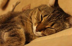 фотография Стерилизация кошки