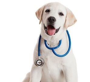 Главный врач городская клиническая больница 10