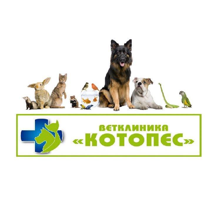 фотография Ветеринарной клиники Котопес на улице Чайковского