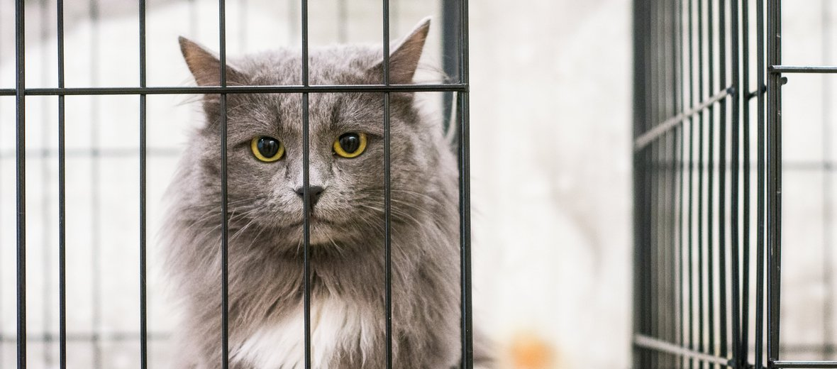 Фотогалерея - Ветеринарная клиника Цуцик на метро Волоколамская