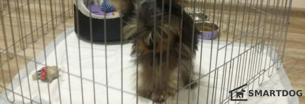 фотография Магазин вольеров для щенков и собак Smartdog24