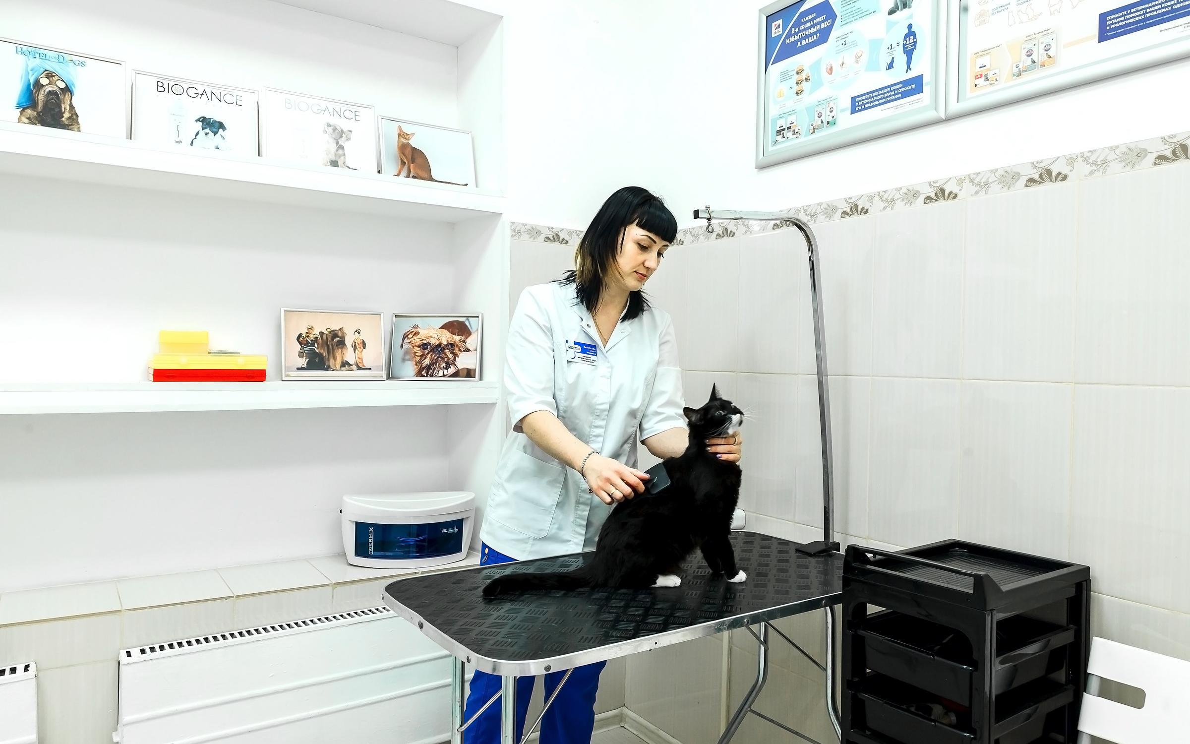 фотография Многопрофильного ветеринарного центра ВетКЭТ на Загородном шоссе