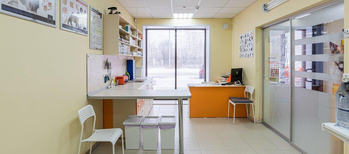 Фотогалерея - Ветеринарный центр Белый Тигр
