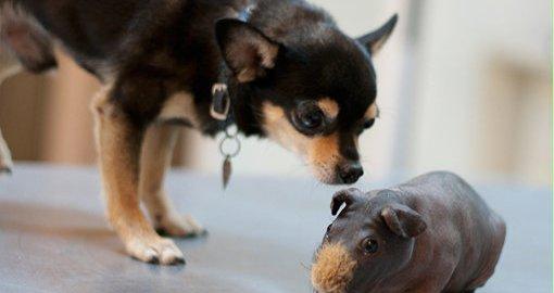 фотография Ветеринарного кабинета в Туапсе