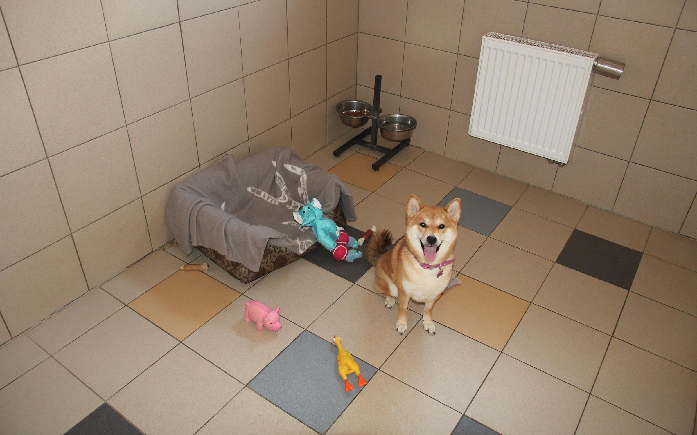 фотография Гостиницы для собак Далматин.ру