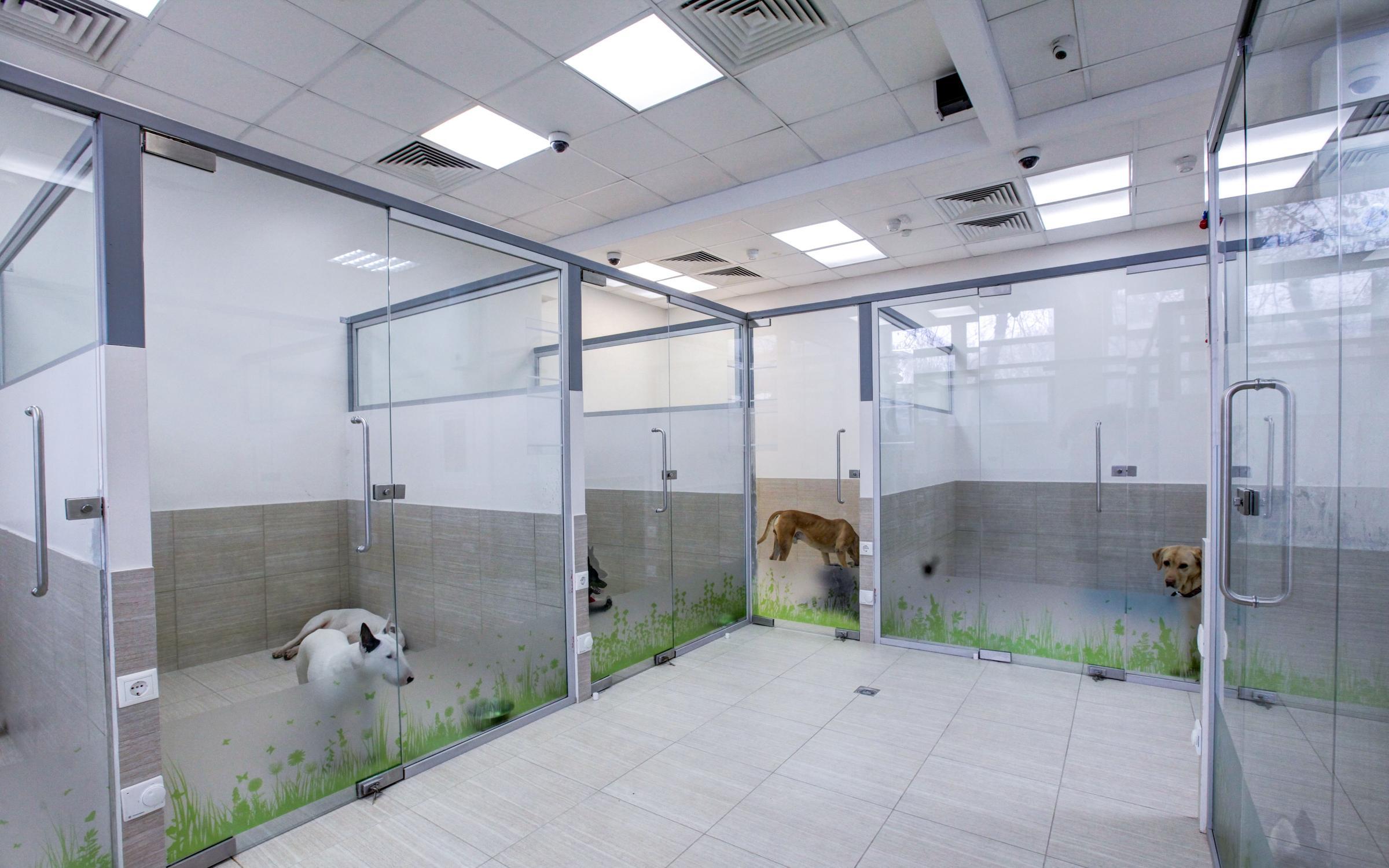 фотография Гостиницы для собак NadoDog на Варшавском шоссе