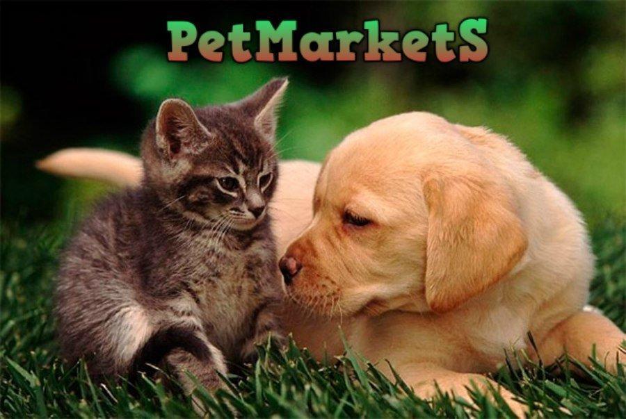 фотография Интернет-магазина товаров для животных Petmarkets на метро Университет