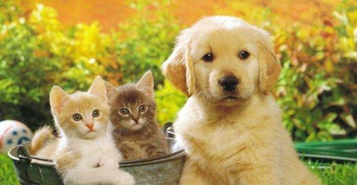 Адрес клиники кот и пес