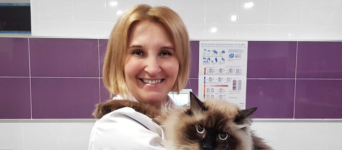 Фотогалерея - Ветеринарная клиника нефрологии ВераВет на Гаккелевской улице