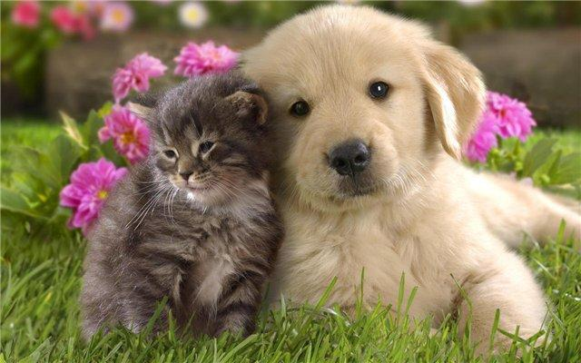 фотография Ветеринарной клиники Зоовет