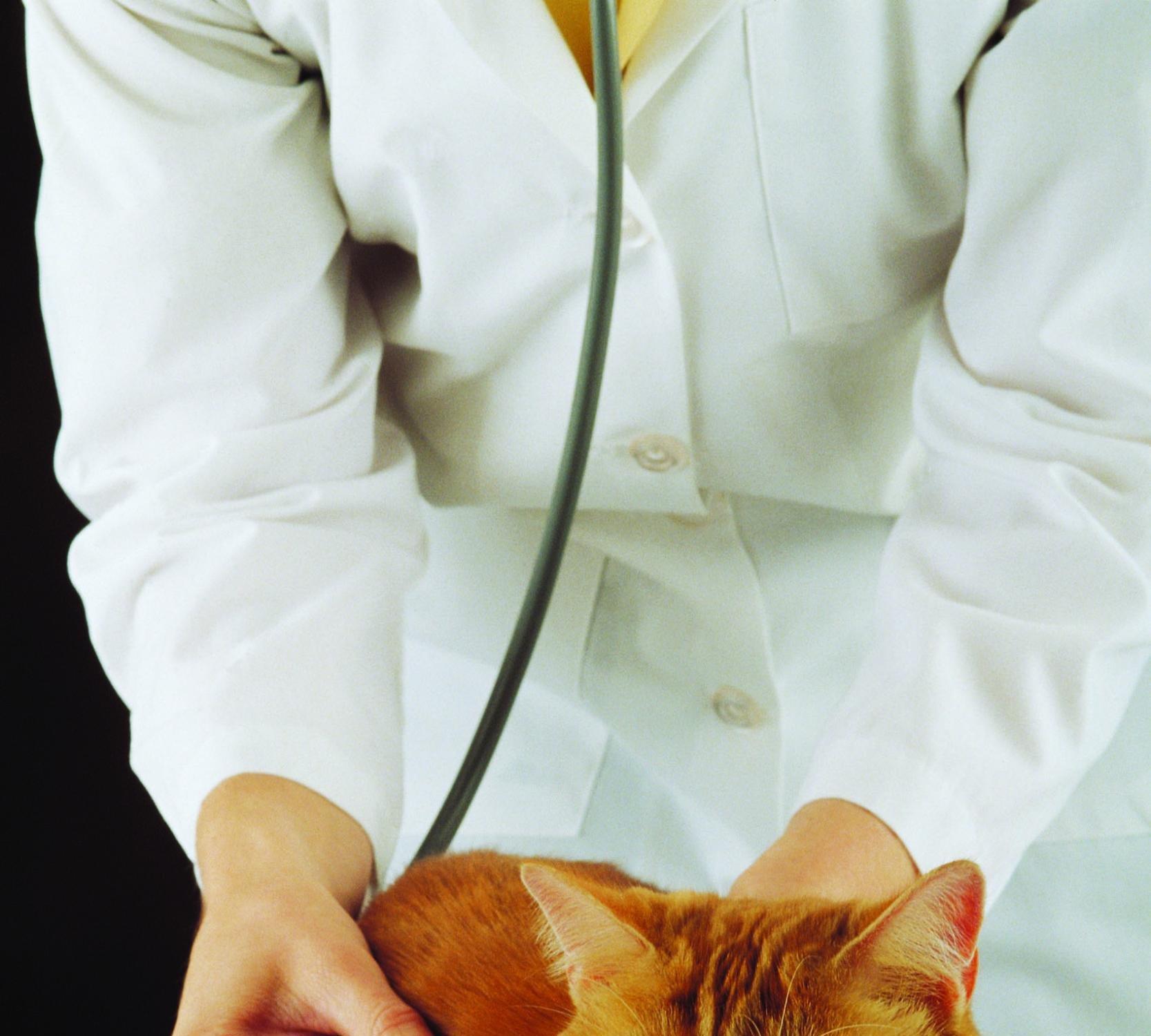 фотография Ветеринарной клиники Забота на Краеведческой улице