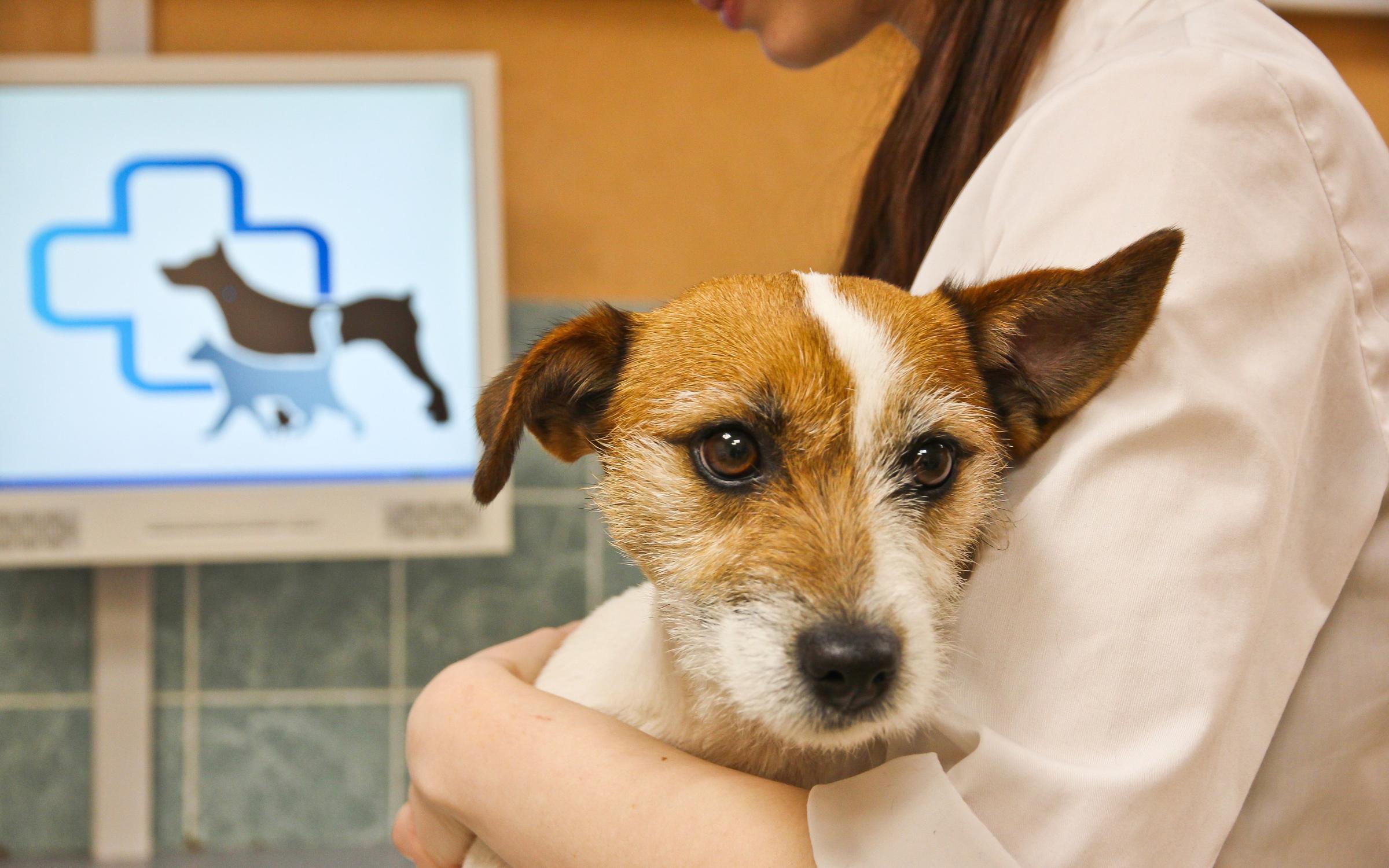 фотография Ветеринарной клиники Ваш Доктор на Витебском проспекте