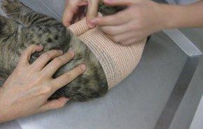 фотография Амбулаторные хирургические манипуляции для животных