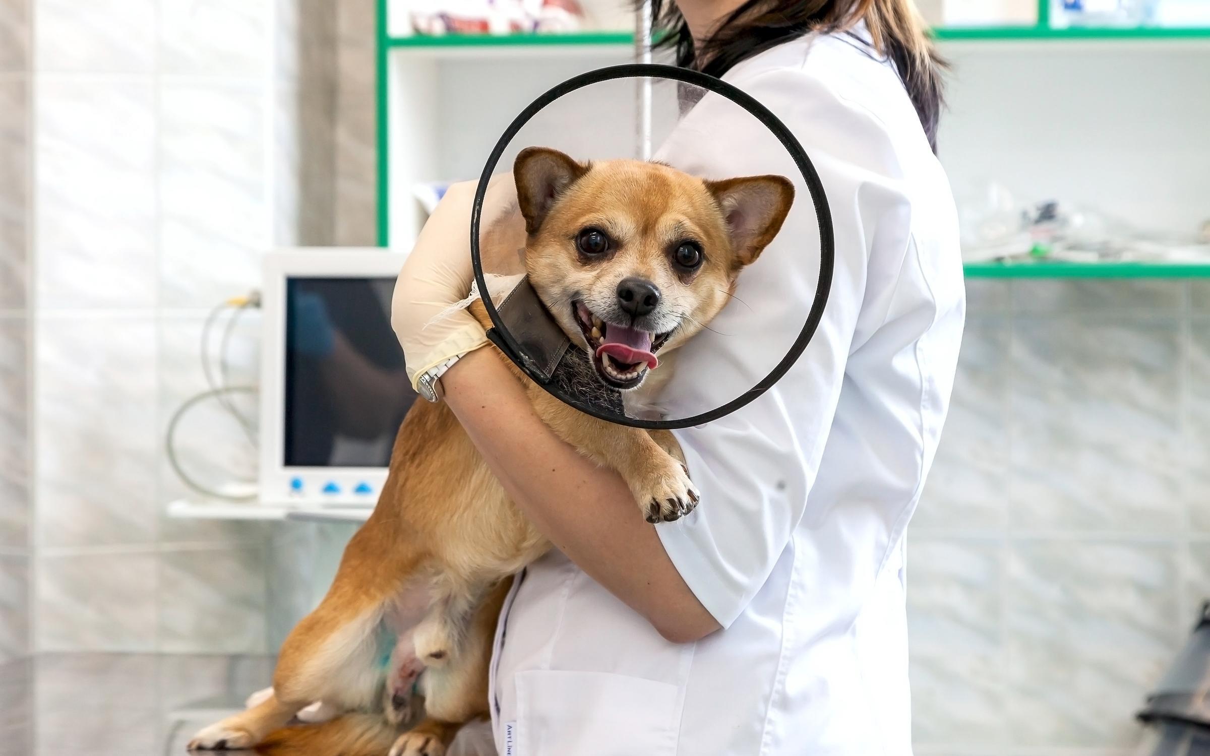 фотография Ветеринарного центра Вет КЭТ в Строгино